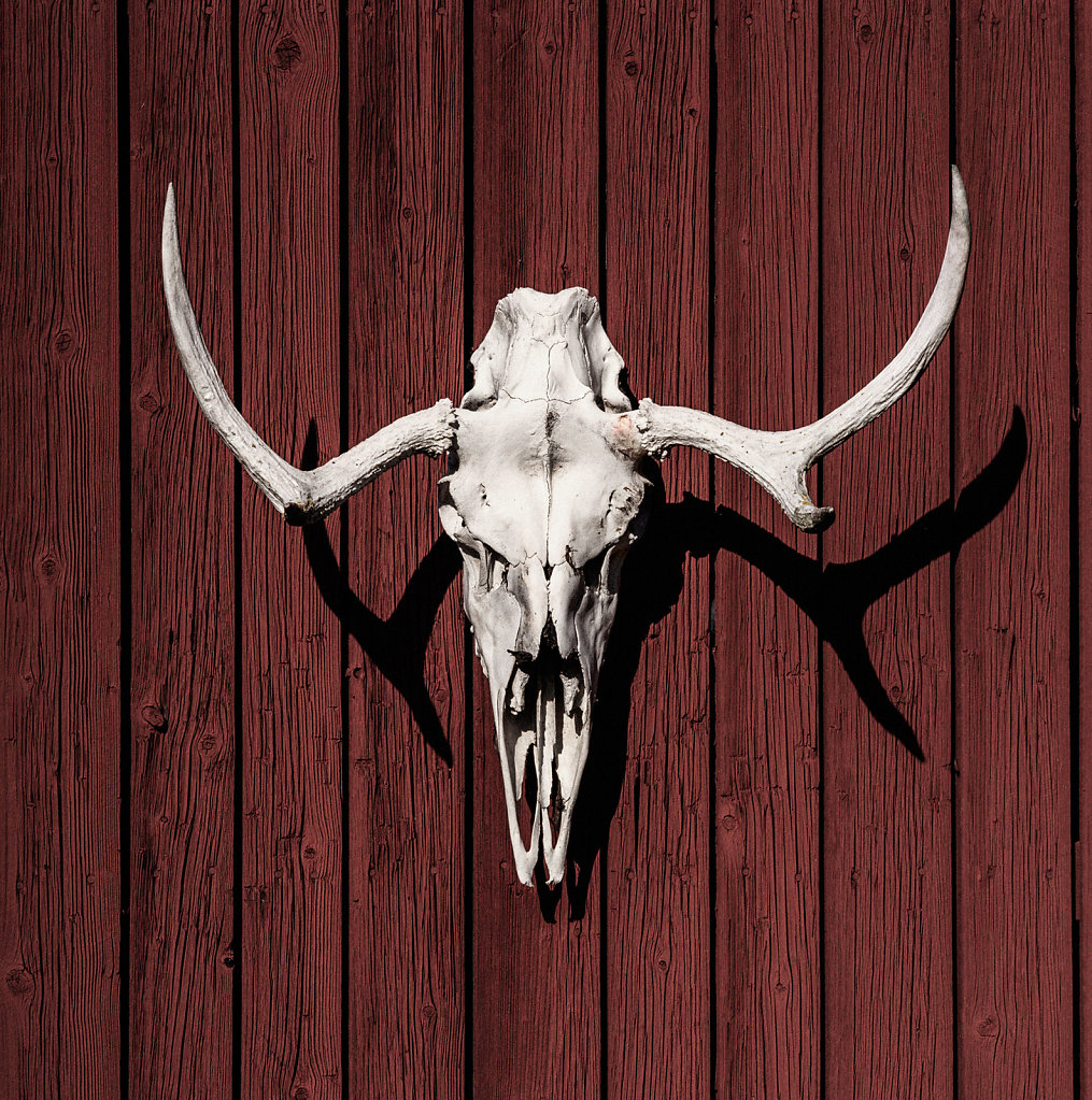 Reindeer Skull, Norway